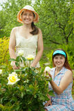 Two female  florists Royalty Free Stock Photo