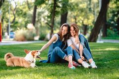 Two female friend in the park play with little dog. Two female friend in the park at lawn play with little dog stock photo