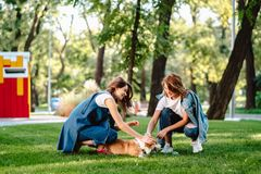 Two female friend in the park play with little dog. Two female friend in the park at lawn play with little dog royalty free stock image