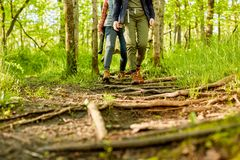 Two female hikers walking along a forest footpath. Strewn with exposed roots and branches in a low angle view of their legs Royalty Free Stock Photography