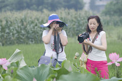 Two female photographers and Lotus. Beauatiful Lotus flower with each colours blooming everywhere and two nifty female photographers is working royalty free stock images
