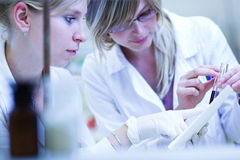 Two female researchers carrying out research. In a chemistry lab (color toned image; shallow DOF Royalty Free Stock Photography