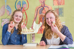 Two female students exploring jaw model with teeth in biology Royalty Free Stock Image