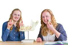 Two female students exploring jaw model with teeth in biology Stock Photo