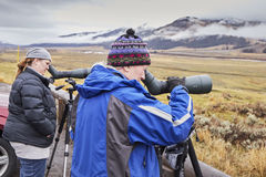 Two female wildlife watchers. Yellowstone National Park, Wyoming, USA - October 29, 2016: Two wildlife female watchers observing a herd of wolves on a cold stock photo