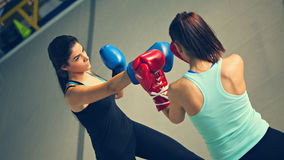 Two Females Sparring Stock Photography
