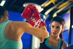 Two Females Sparring Royalty Free Stock Photography