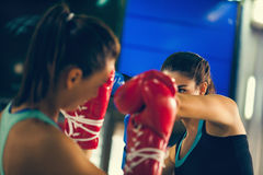 Two Females Sparring Royalty Free Stock Photos