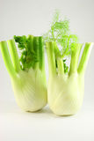 Two fennel. Close-up with leaves, isolated Royalty Free Stock Photography