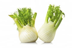 Two fennel royalty free stock image