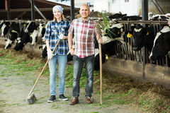 Two fermers preparing grass Stock Image