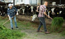 Two fermers preparing grass Stock Photo