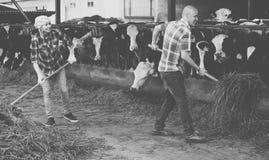 Two fermers preparing grass Stock Photos