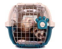 Two Ferrets in cage isolated Royalty Free Stock Photos