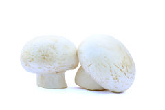 Two field mushrooms isolated Stock Photos
