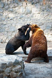 Two fighting bears Royalty Free Stock Images