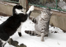 Two fighting young cats Royalty Free Stock Photos