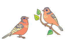 Two finch. One of them sitting on a branch Royalty Free Stock Image