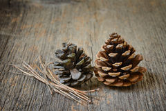 Two fir cones with branches Royalty Free Stock Photo