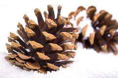 Two fir cones in the snow Stock Image