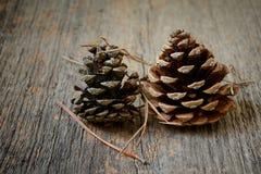 Two fir cones Stock Photos