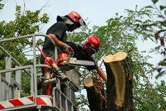 Two firefighters. Two firemen cuting tree after storm Royalty Free Stock Images