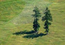 Two firs. Two fir-tree resting man , green grass, hillside Stock Photography