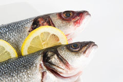 Two Fish Stock Images