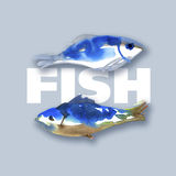 Two fish Stock Photography