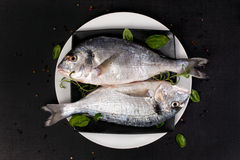 Two fish with fresh herbs on plate, top view. Stock Photo