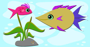 Two Fish Friends and a Rock. These two fish love to meet each day Stock Image