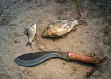 The two fish lie on the sand and a machete Stock Photos