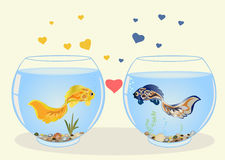 Two fish in love. Two cute fish in love, they are swimming in different aquariums, look at each other. Romantic feeling concept. Greeting card with Valentine`s Stock Photography