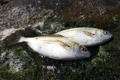Two fish Stock Photos