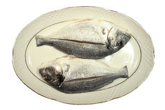 Two fish in plate royalty free stock photo