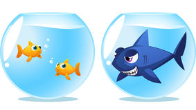 Two fish scared of Dangerous shark. Dangerous shark fishbowl tank fish neighbour  illustration Royalty Free Stock Image