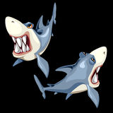 Two fish sharks on a black background, two sides Royalty Free Stock Photography