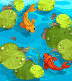 Two fish swimming in the pond Stock Image