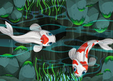 Two fish swimming in the pond Stock Photography