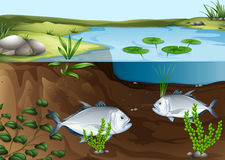 Two fish swimming in the pond Royalty Free Stock Image
