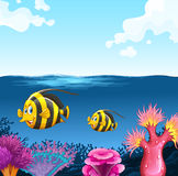 Two fish swimming under the sea Stock Photo