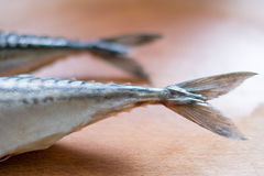 Two fish tail. Stock Photography
