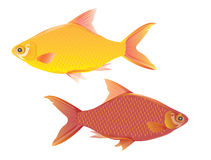 Two fish Stock Photos