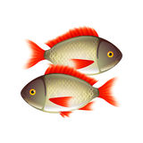 Two fish  on white vector Royalty Free Stock Photo