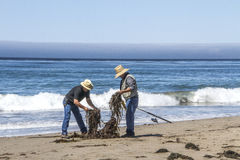 Two Fishermen at a daytime beach untangle lines from seaweed. Two fishermen on the shore of Jalama Beach work as a team to untangle fishing lines mixed in with Stock Photography