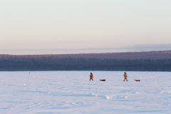 Two fishermen at sunset walk on the snow in winter. Winter fishi Royalty Free Stock Photos