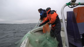 Two fishermen take out the network with the catch in the Baltic sea. stock video