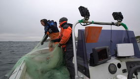 Two fishermen take out the network with the catch in the Baltic sea. stock video footage