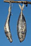 Two fishes. Two death fishes hanging for dry Stock Photography