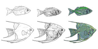 Two fishes Royalty Free Stock Photo